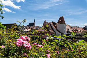 Pictures Czech Republic Houses Flowering trees Roof Cesky Krumlov Cities