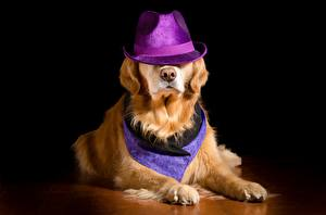 Desktop wallpapers Dogs Golden Retriever Hat Laying Paws Animals
