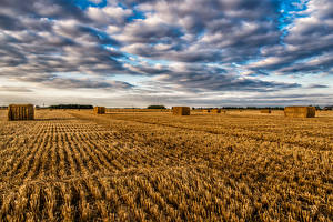 Picture England Fields Sky Clouds Straw