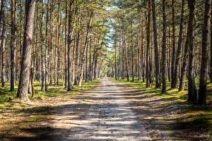 Photo Forest Roads Trees Nature