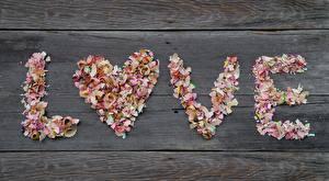 Hintergrundbilder Liebe Valentinstag Text Englischer Bleistifte Herz shavings