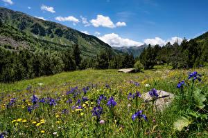 Fotos Gebirge Grünland Andorra Gras Bäume Sorteny