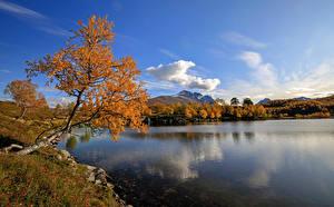 Fotos Norwegen Herbst See Himmel Bäume Kilstivatnet Natur