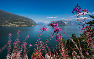 Pictures Norway Mountains Sky Hardangerfjord Nature