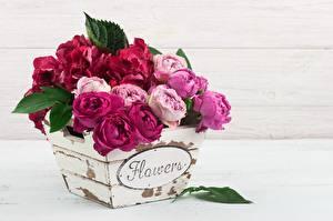 Bilder Rose Sträuße Wort Englischer Blüte