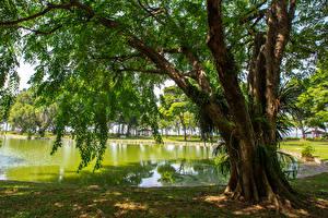 Bakgrundsbilder på skrivbordet Singapore Parker En damm Träd East Coast Park