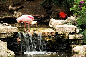 Photo Stone Birds Creek Pink color Roseate spoonbill Animals