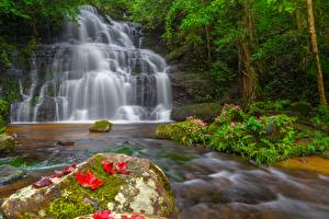 Pictures Stones Waterfalls Foliage Moss Nature