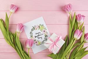Bilder Tulpen Muttertag Rosa Farbe Englisches Blumen