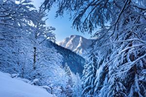Fotos Winter Gebirge Österreich Schnee Alpen
