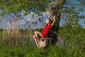 Papel de Parede Desktop Toco árvores Sentada Vestido Pernas Anastasia mulheres jovens
