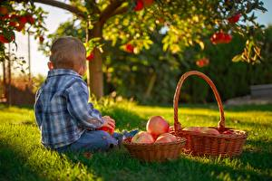 Bilder Äpfel Gras Weidenkorb Jungen Sitzend kind