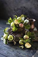 Fotos Äpfel Stillleben Ast das Essen
