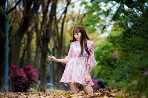 Hintergrundbilder Asiatische Herbst Braune Haare Kleid Blatt Unscharfer Hintergrund Mädchens