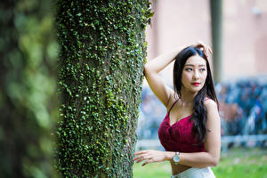 Wallpaper Asiatic Brunette girl Posing Trunk tree Staring Blurred background young woman