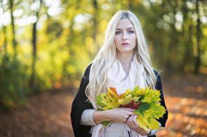 Bilder Herbst Blond Mädchen Blattwerk Blick Unscharfer Hintergrund Julia junge Frauen Natur