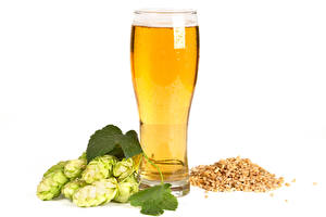 Hintergrundbilder Bier Echter Hopfen Weißer hintergrund Trinkglas Getreide