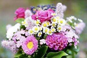 Tapety na pulpit Bukiet Róże Dalia Z bliska Bokeh Kwiaty