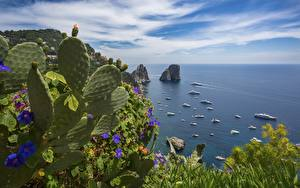 Fotos Kakteen Yacht Meer Italien Insel Bucht Horizont island Capri Natur