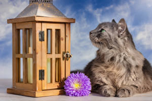 Pictures Cats Asters Flowers