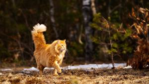 Pictures Cats Blurred background Redhead girl Stroll Animals
