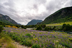 Image Chile Mountains River Lupinus Clouds Valley Patagonia Nature