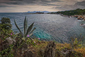Image France Coast Evening Cacti Bay Antibes Nature