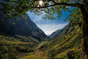 Photo Norway Mountains Trees Branches Sun Valley Hardanger