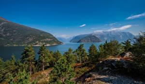 Bakgrundsbilder på skrivbordet Norge Berg Träd Hardangerfjorden