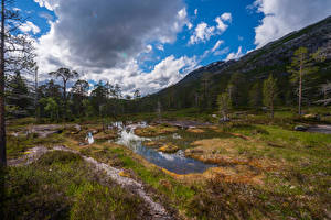 Wallpapers Norway Park Mountain Trees Clouds Rago National Park Nature