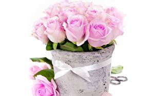 Photo Roses Bouquets Pink color Flowers