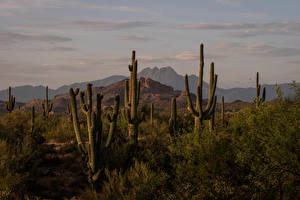 桌面壁纸,,美国,山,仙人掌,Four Peaks, Arizona,