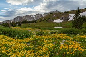 Bilder Vereinigte Staaten Berg Grünland Wolke Medicine Bow-Routt National Forests Natur