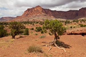 Bilder USA Parks Felsen Bäume Capitol Reef National Park Natur