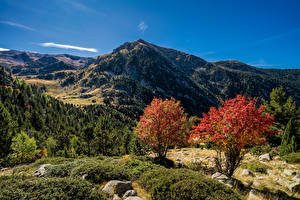Image Andorra Mountain Autumn Trees Pyrenees
