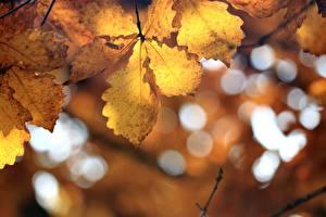 Fotos Herbst Eichen Blatt Unscharfer Hintergrund Natur