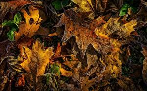 Hintergrundbilder Herbst Eichen Blattwerk Reif niederschlag Natur