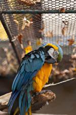 Fotos Vogel Papagei Eigentliche Aras ein Tier