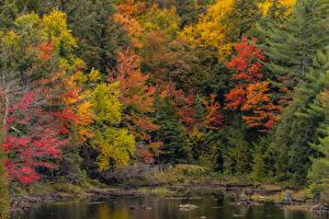 デスクトップの壁紙、、カナダ、公園、秋、池、木、Algonquin Park Ontario、
