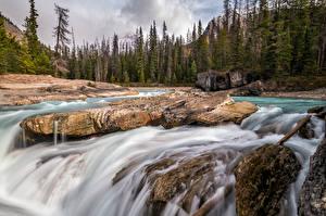デスクトップの壁紙、、カナダ、川、石、木、British Columbia、自然