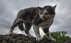 Hintergrundbilder Katze Grinsen