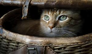 Photo Cat Wicker basket Glance