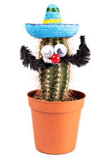Pictures Creative Cactuses White background Flower pot Hat Design Flowers