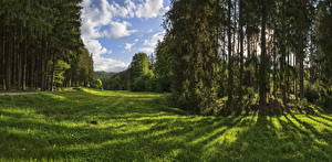 Wallpapers Germany Park Forest Trees Grass Naturpark Augsburg