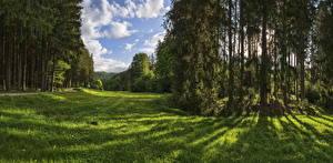 デスクトップの壁紙、、ドイツ、公園、森林、木、草、Naturpark Augsburg、