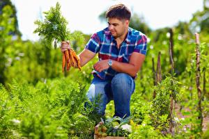 Desktop hintergrundbilder Mann Gemüse Mohrrübe Sitzend