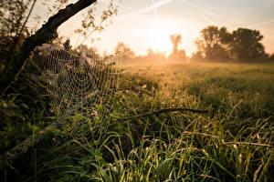 Desktop wallpapers Morning Grass Spider web Nature
