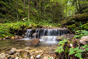 Images Slovakia Forests Stones Trees Stream Spisska Nova Ves