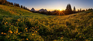 Images Switzerland Mountains Grasslands Evening Sunrise and sunset Alps trollius, Schwyz