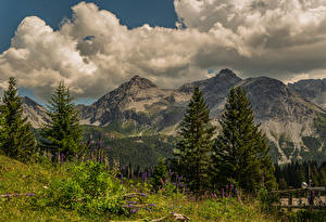 Photo Switzerland Mountain Lupinus Landscape photography Alps Clouds Spruce Arosa, Grisons